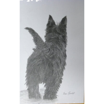 Drawing Of One Pet